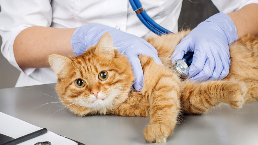Эндоскопиия для кошек в Харькове, цена, запись на прием | Ветклиника ПЕС и  КОТ